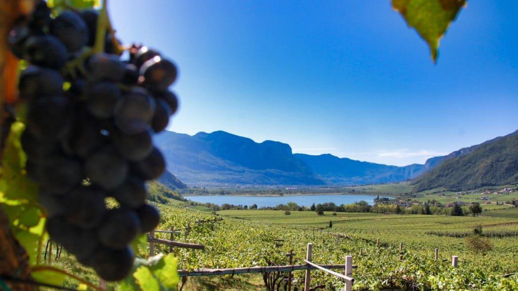 Der Kalterer See und die Weinberge